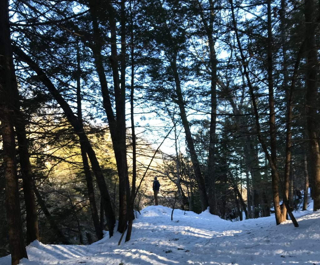 A wooded opening on the Presumpscot River Preserve trail - a hiking trail near Portland, Maine