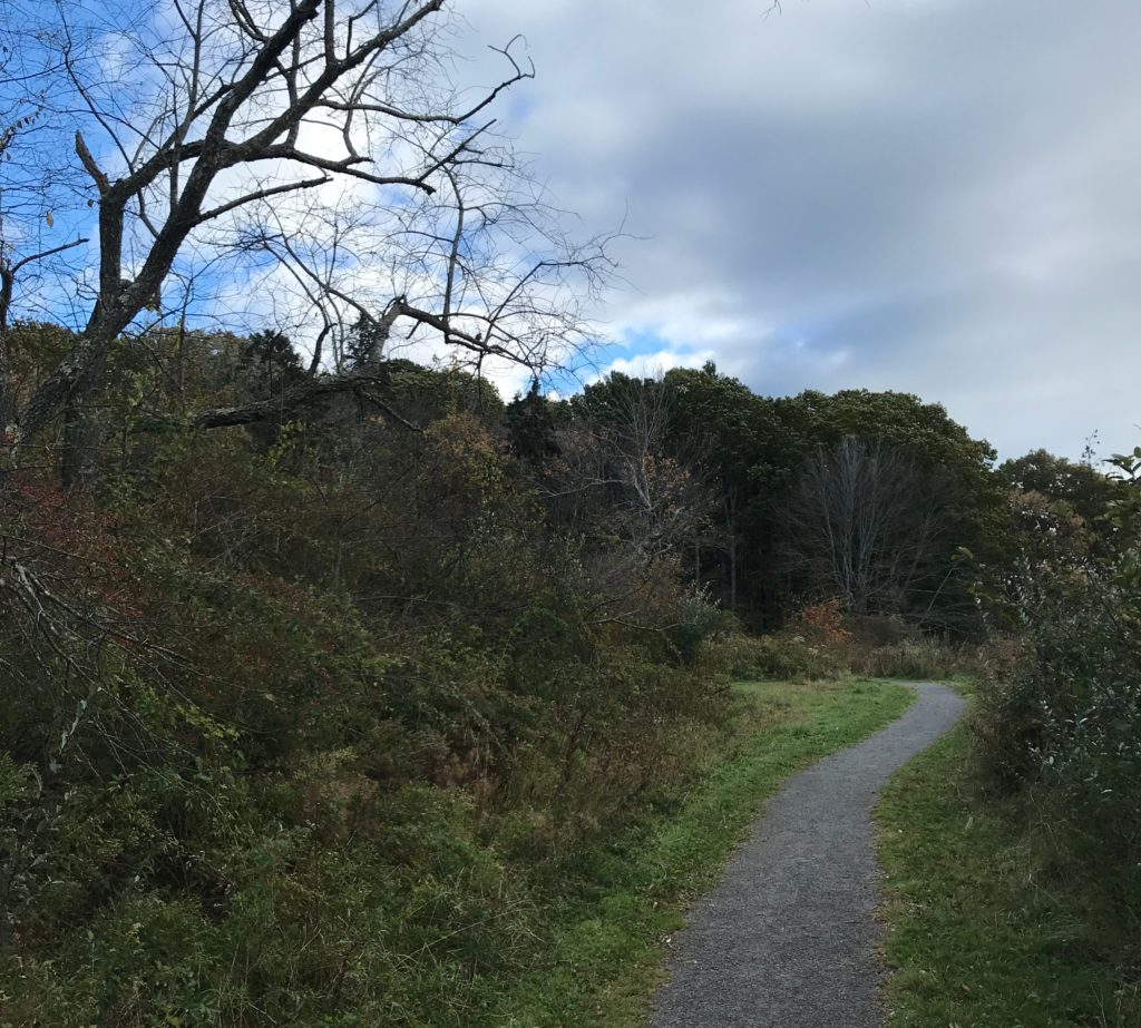 Walking trail leading through dense brush and grass