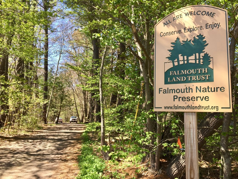 A path leading into the woods in the Falmouth Nature Preserve