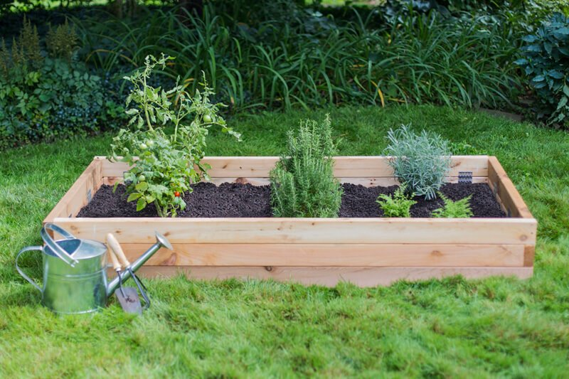 raised garden bed with growing vegetables