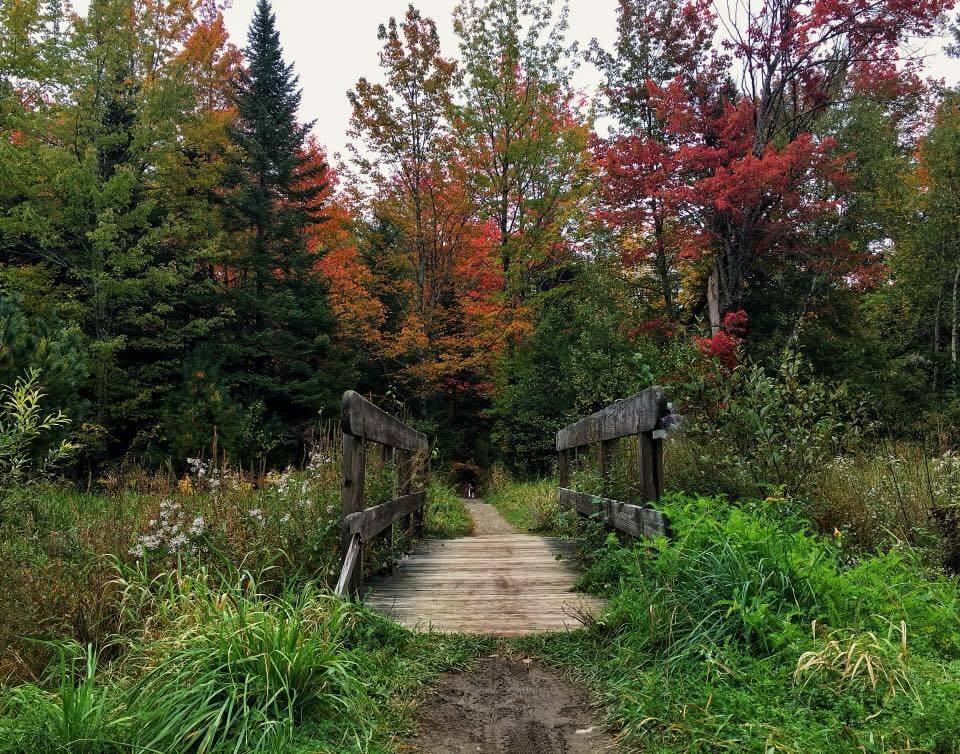 9 Easy Hikes Near Bangor, Maine