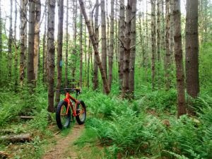 A bike parked in a hiking trail of Jeremiah Colburn Natural Area.