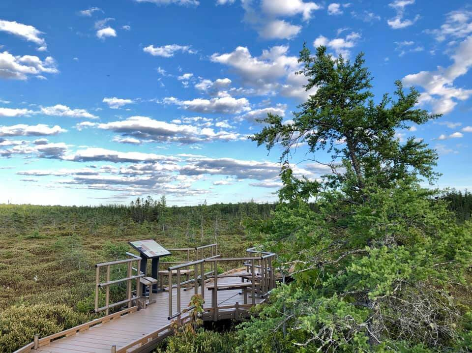 A boardwalk overlooking the Orono bog.