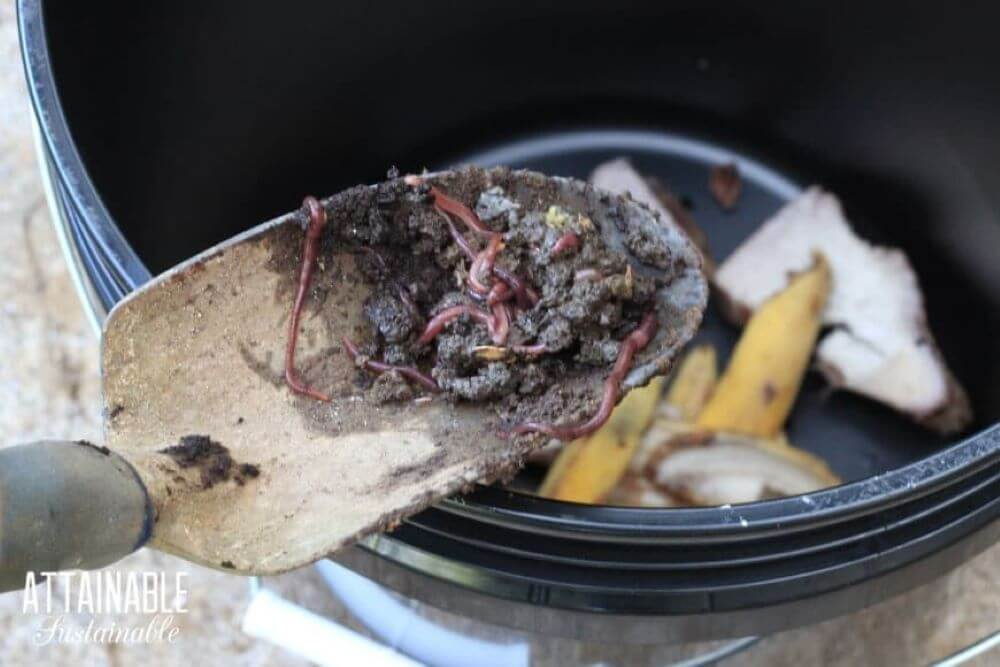A shovel dropping worms and dirt into a five-dollar worm bin.