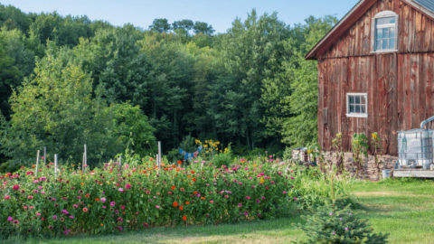 10 Ways To Start Homesteading Right Now