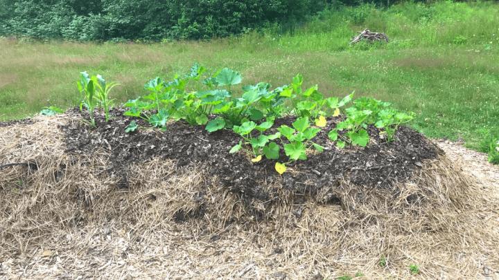 Hugelkultur Gardening: The Ultimate Guide