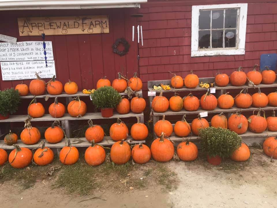 Big orange pumpkins lined up in front of a red farm stand at Applewald's Farm in Maine.