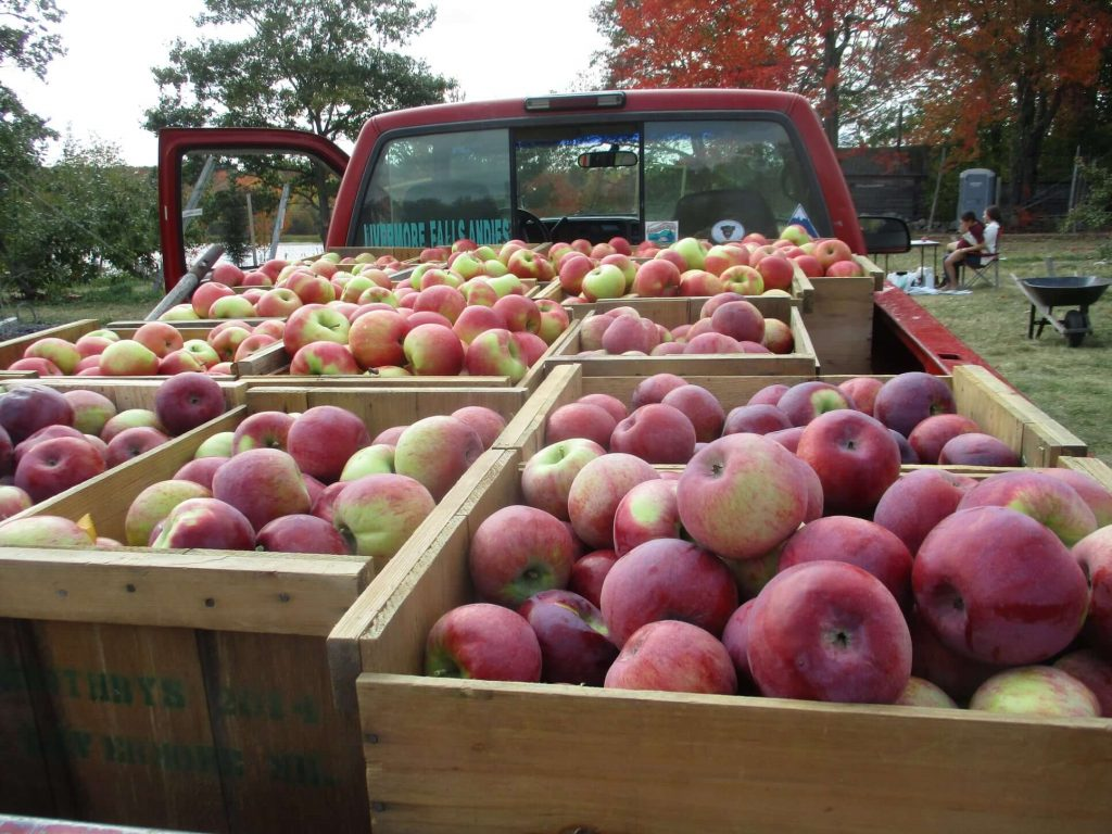 A truck full of apples in crates at Boothby's Orchard in Maine.